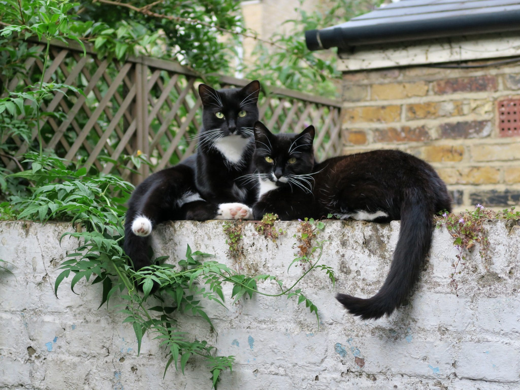 Two cats on a wall
