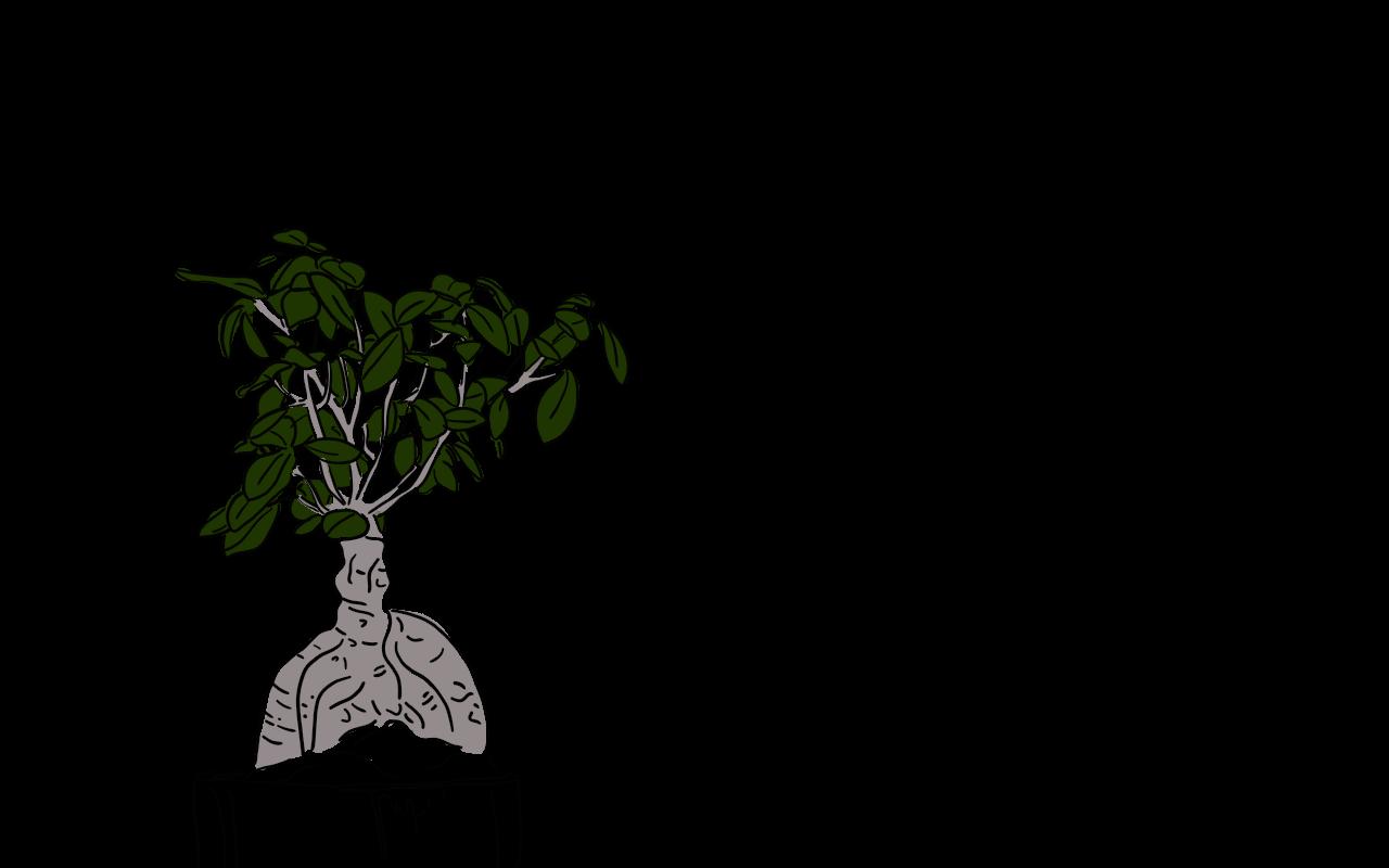 Bonsai Tree - Line Drawing