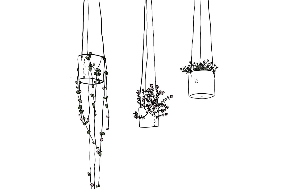 Hanging Plants - Line Drawing
