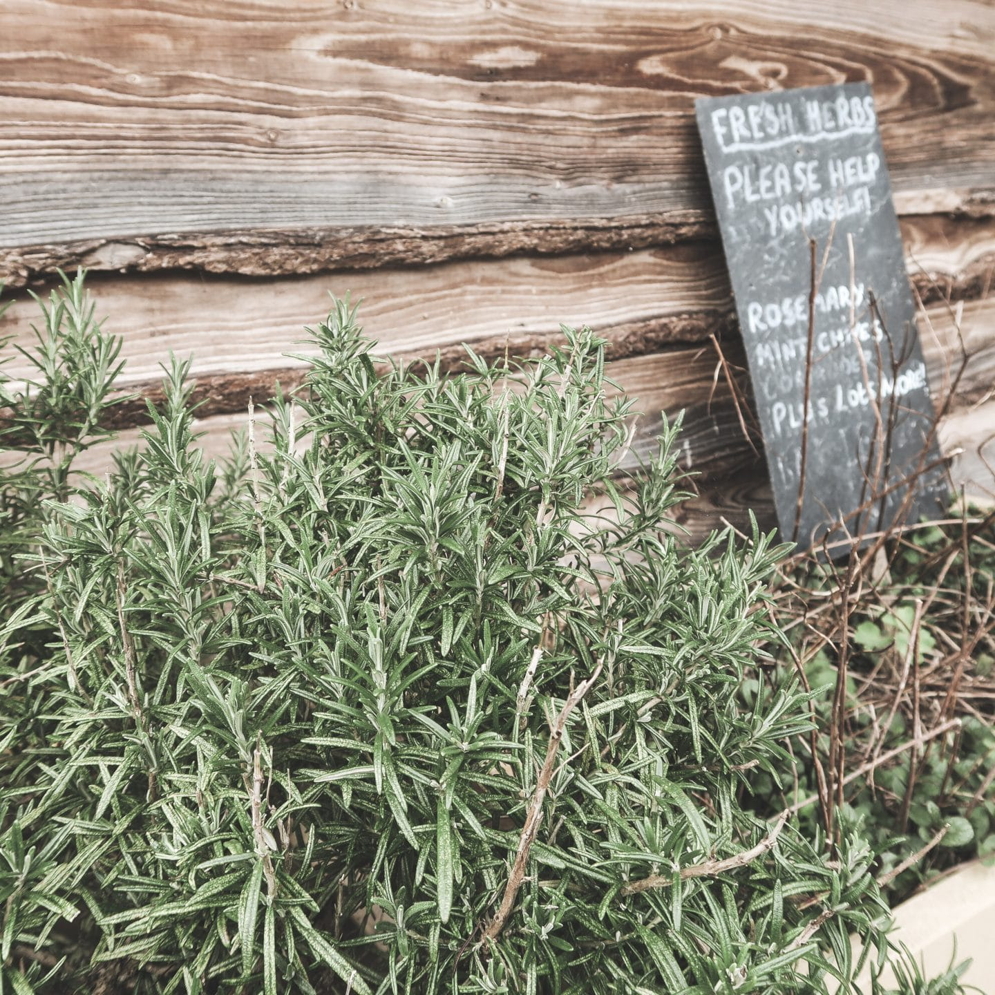 Fresh Herb Garden at Hidden Valley Yurts | Curiously Conscious