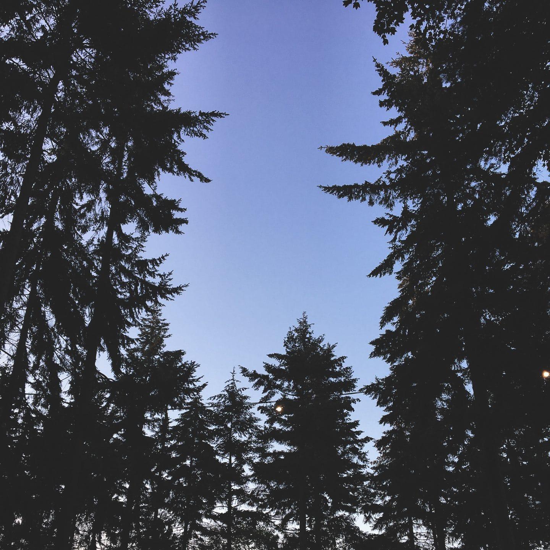 Festival Diaries: Latitude   Curiously Conscious