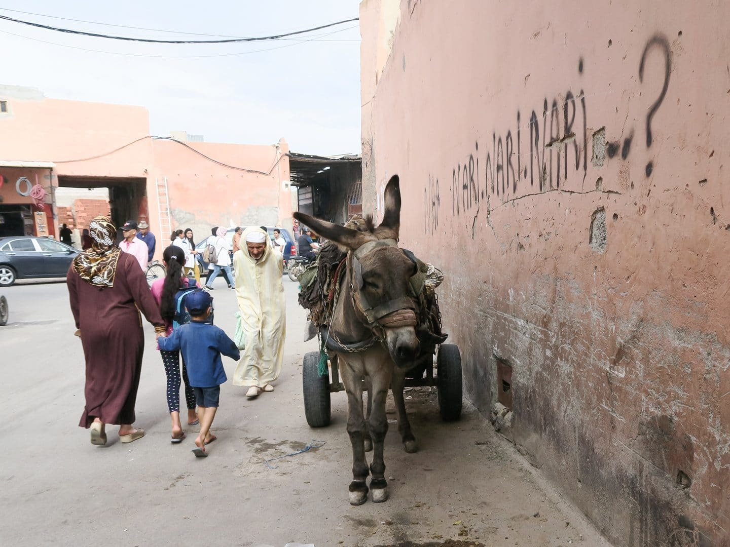 Donkey in Marrakech, Morocco | Curiously Conscious