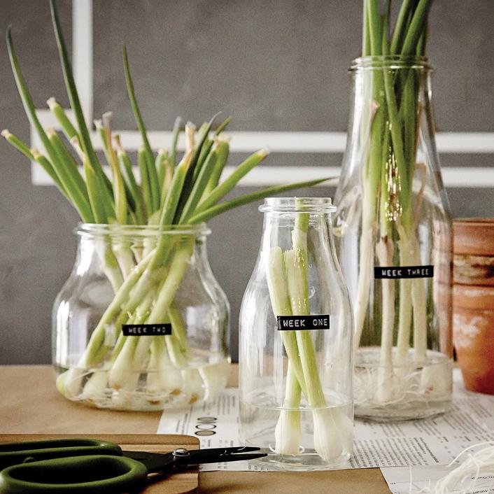 Grow jars