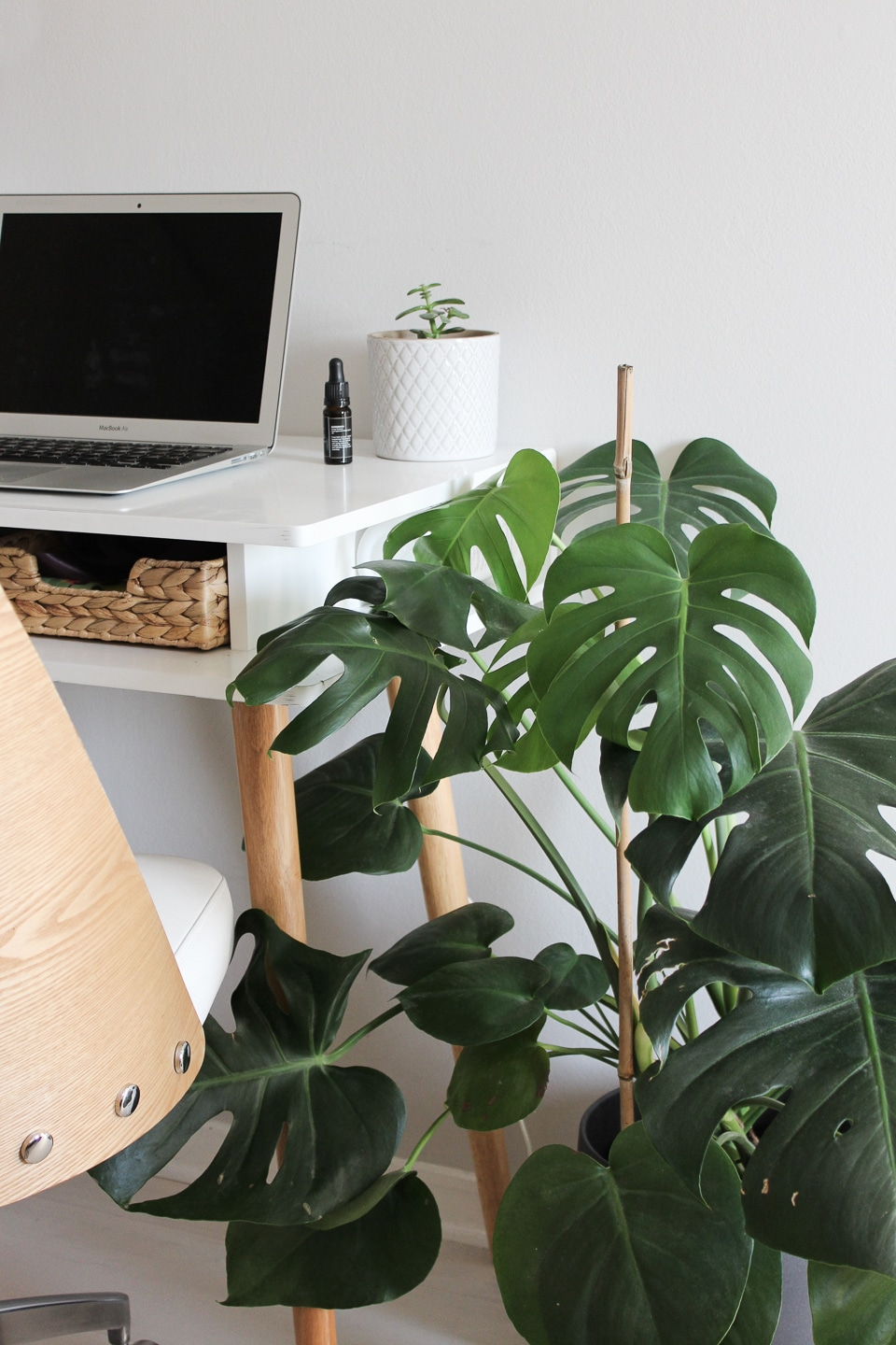 Minimal desk next to chair and large monstera plant