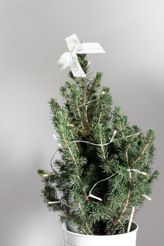 Real fir Christmas tree