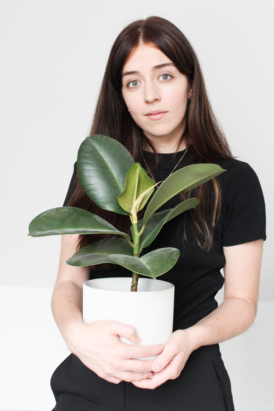 Besma holding rubber plant